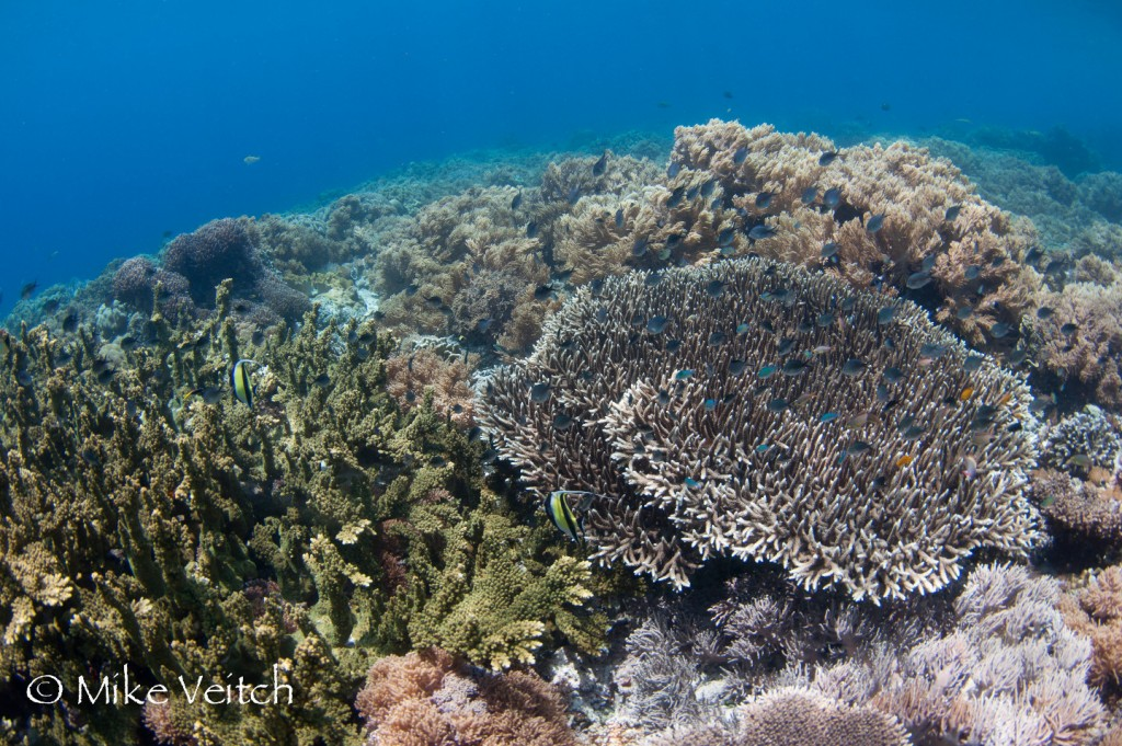 Hard coral reef in the shallows