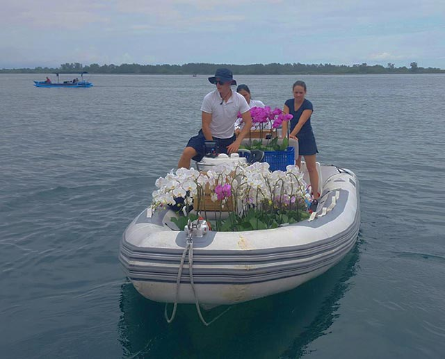 Bali Orchid Delivery